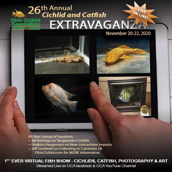 OCA Extravaganza 2010