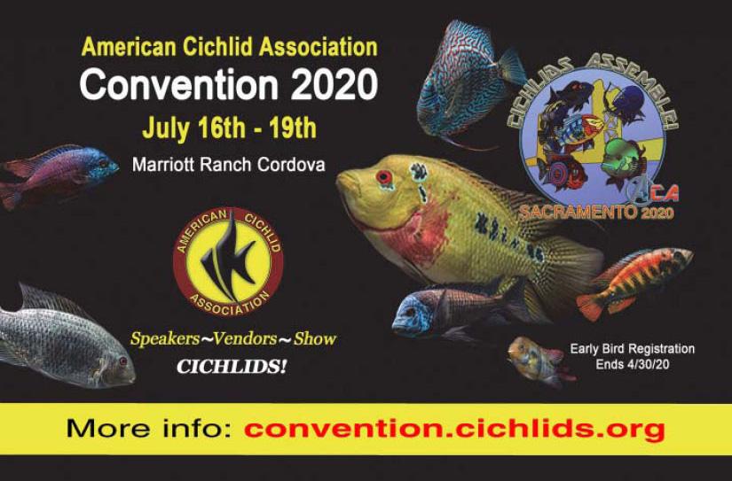 ACA Convention 2020