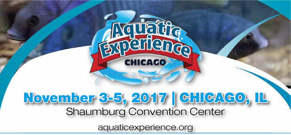 Aquatic Experience, Chicago