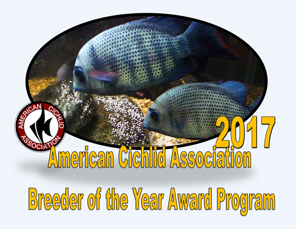 ACA breeder of the year